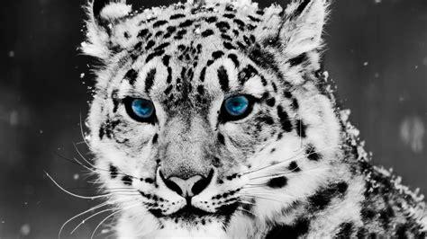 imagenes de animales hermosos del mundo los 10 animales m 225 s hermosos del mundo youtube