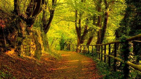 wallpaper windows 10 path 11 windows 8 hd desktop wallpapers forests and woodlands