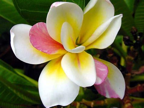 foto di fiori esotici fiori esotici homeimg it