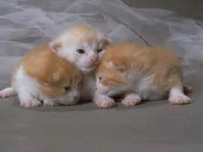 newborn kittens top 30 most cutest baby cat pictures cutest cats