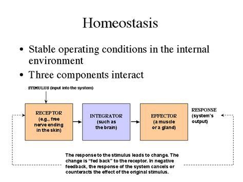 homeostasis mrs j s science
