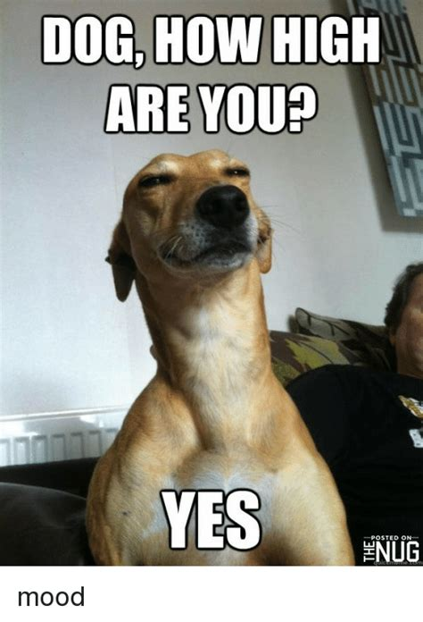 High Dog Meme - dog how high are you yes hnug funny meme on sizzle