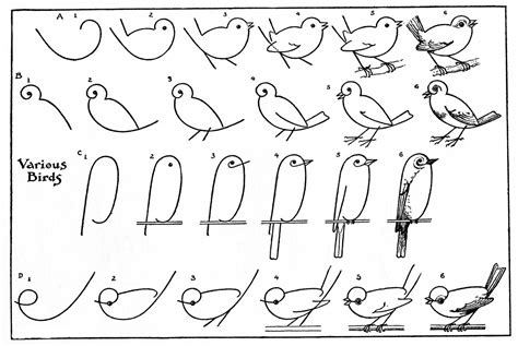 How To Draw Bird Printable Draw Some Birds 2 The Graphics