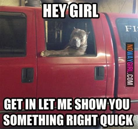 Internet Dog Meme - internet dog meme funny dog memes hey girl get in let me show you something nowaygirl