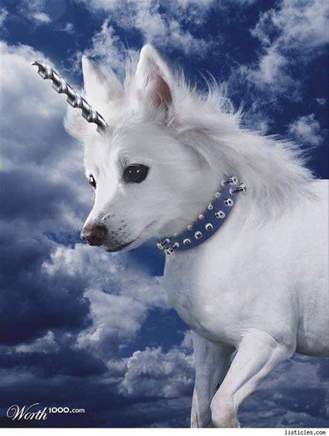 unicorn puppy unicornomics 20 unicorns 2 beers 1 maze 0 tattoos thanks urlesque