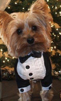 yorkie wedding animal weddings on wedding dogs collars and wedding cake toppers
