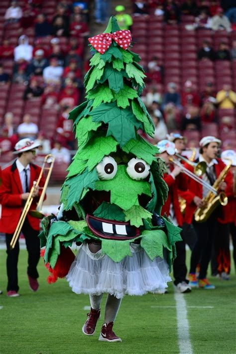 tree mascot 20 of the most college mascots
