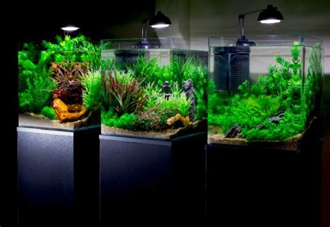 How To Set Up An Aquascape by How To Create A Multi Tank Set Up With Plastic Plants