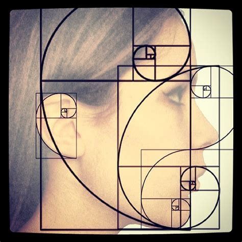 golden section art definition the golden ratio on the human face and head wisdom geom