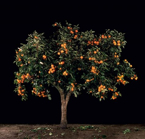 fruit trees new york pin by gary krall on stuff i like