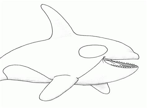 killer whale coloring pages killer whale orca coloring coloring pages killer