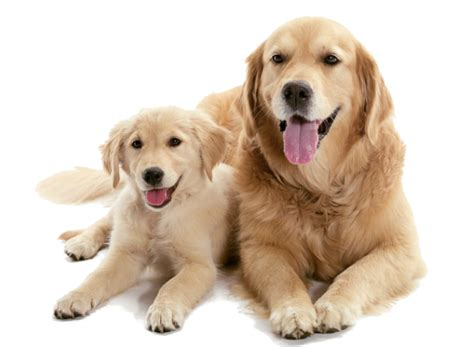 what to feed a 2 month puppy pets n more caring for a puppy or