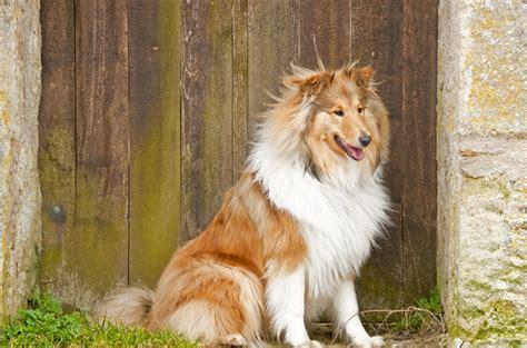 friendliest breeds top 10 friendliest breeds
