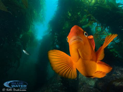 best underwater lensesunderwater photography guide best underwater settings for the olympus om d e m1 camera