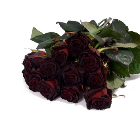 send roses black roses buy a bouquet of black roses with post a