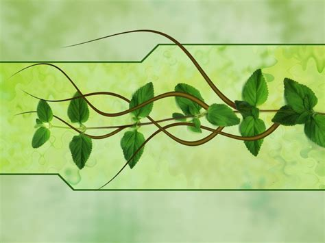 green vine wallpaper garden design 72581 garden inspiration ideas