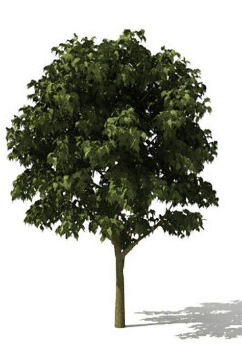 free tree model tree 3d models free 3d tree