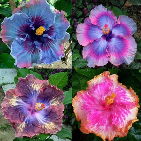 Rare Color Plant 100pcs Mix Exotic Coral Flower Seeds Flower Garden Seeds