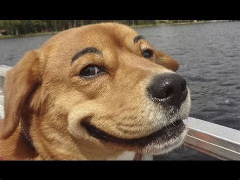 dogs with eyebrows dogs with eyebrows compilation 2013 hd