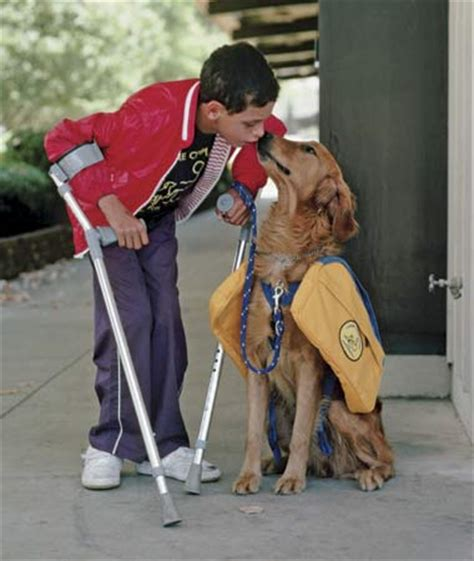 new law provides protections for service dogs and their owners