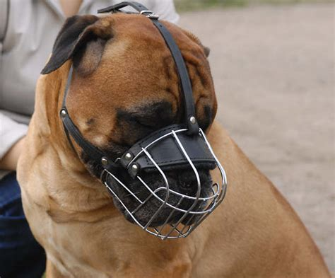 large muzzle muzzles leather muzzles wire muzzles basket muzzle muzzle stress