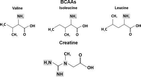 creatine or amino acids chemical structures of branched chain amino acids bcaas