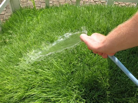 7 tips for green lush grass better housekeeper