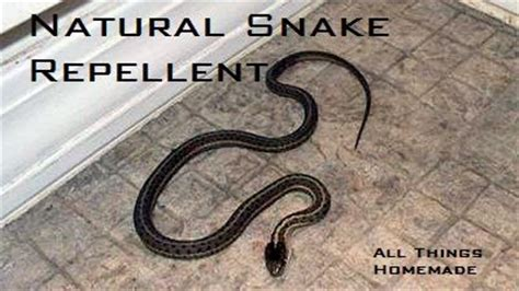 Garden Snake Deterrent Best 25 Walkways Ideas Only On Walkway Ideas