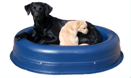chew resistant dog bed chew resistant dog bed beauteous chewproof dog bed reviews design decoration bedding