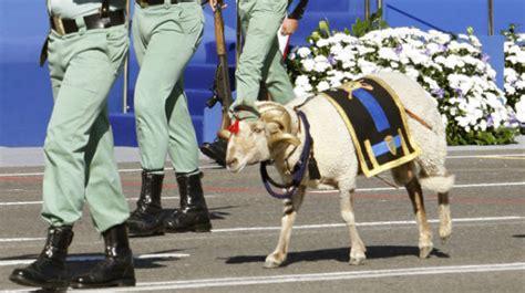 cuanto gana un sereno o wachtman vigilante en venezuela muere la cabra de la legi 243 n