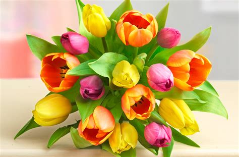 all about tulips petal talk