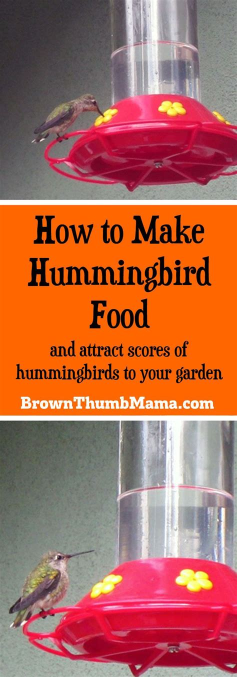 25 best ideas about hummingbird food on pinterest
