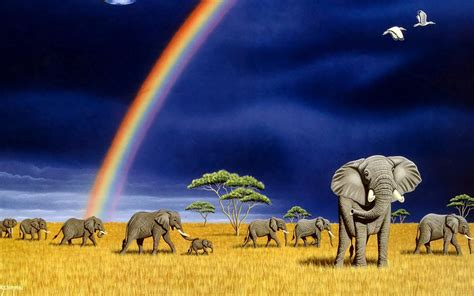 beautiful elephants high resolution images hd wallpapers