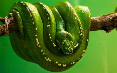 la verde pit 243 n arbor 237 cola verde