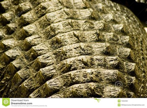 Alligator skin stock photo. Image of humid, rough, texture ...