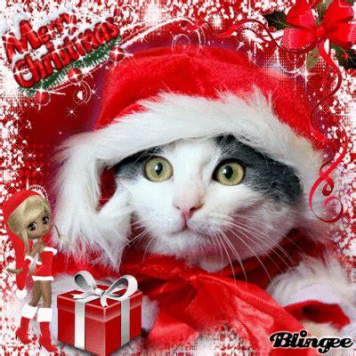images of merry christmas kittens merry christmas kitten picture 126874468 blingee com