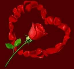 rosas brillantes con movimiento rosas brillantes con movimiento fotos db picture