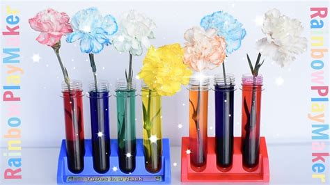 color changing carnations carnations rainbow color changing diy science experiment