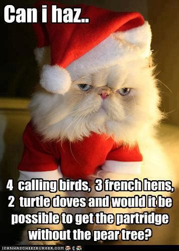 Funny Christmas Cat Memes - funny cat christmas song jokes memes pictures