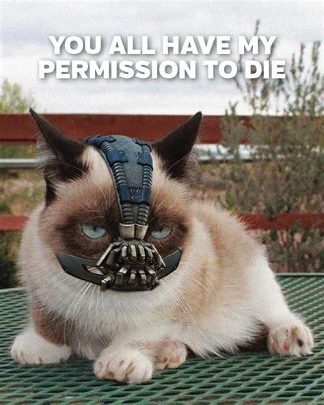 Bane Cat Meme - grumpy cat bane meme nerd ho pinterest