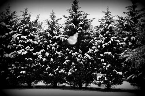 15 black and white christmas graphics images christmas