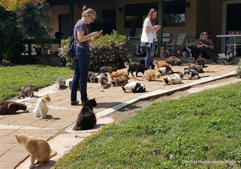 cat house on the kings couple celebrates vow renewals with help from hundreds of rescue cats