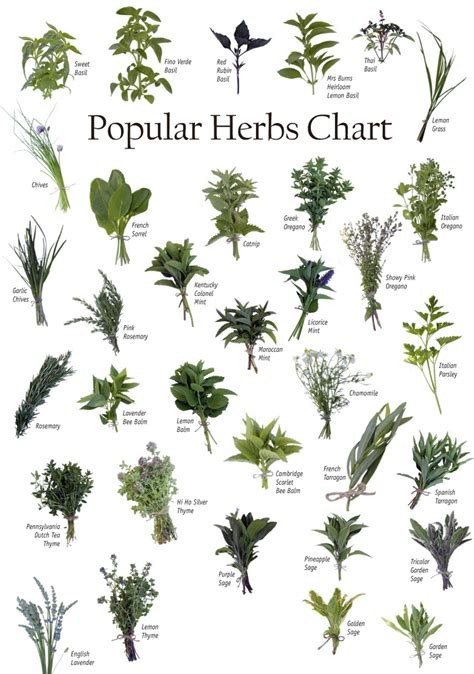 herbs chart list of 1 000 herbs against cancer secretly healthy