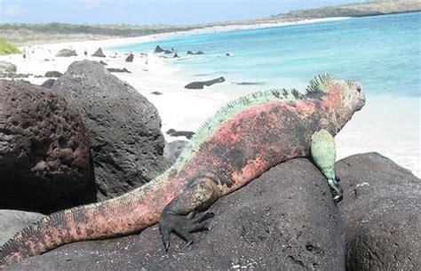 imagenes animales galapagos islas galapagos