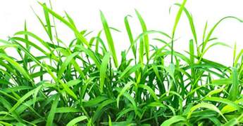 when is the best time to plant grass