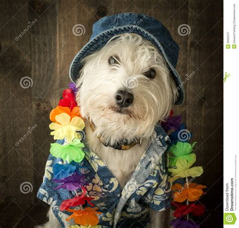 vacation dog stock image image  white west furry