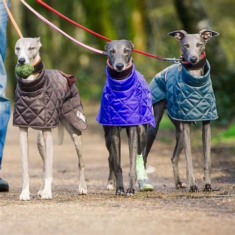 pattern greyhound coat wonderful whippet dog coat patterns why not make them