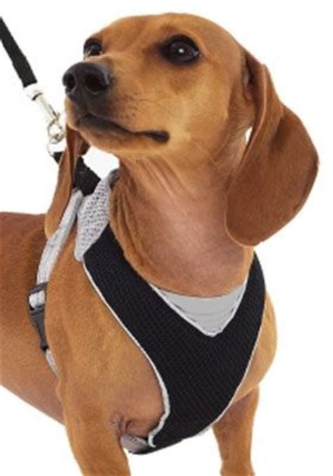 comfortable dog harness small pin by preciouspenthousepooches on pet accessories