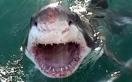 dragging shark behind boat names the news behind the news page 1203 david icke s