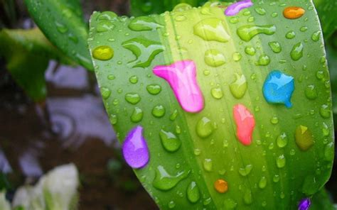 color raine raindrops bright colors wallpaper 18125673 fanpop